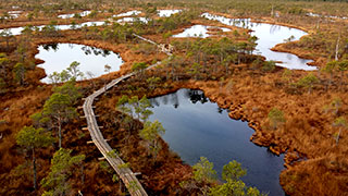 Bog Boardwalk in Kemeri National Park and Baltic Seaside Tour