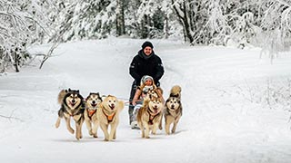 Husky Dog Sledding Tour on the Countryside